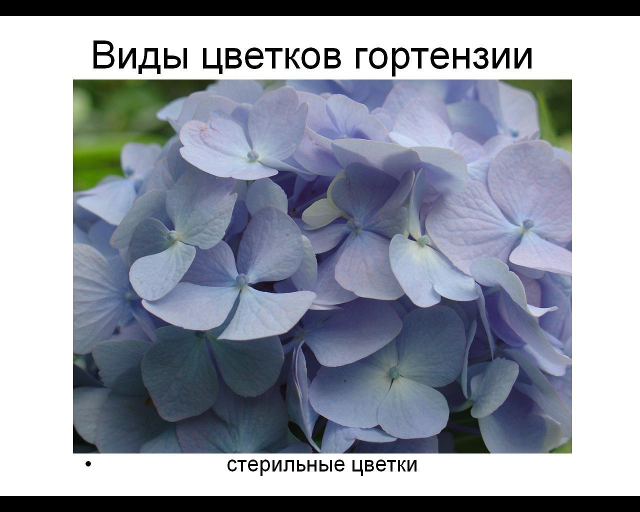 Бесплодный цветок